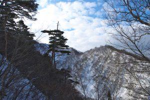 獅子畑登山道から見る中尾根