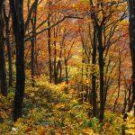 獅子畑登山道の紅葉