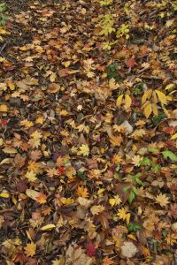 登山道の落ち葉