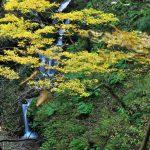 西川渓谷の紅葉
