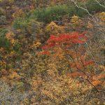 二口登山道からの紅葉
