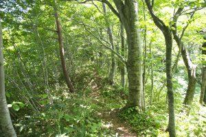 山頂の尾根道