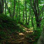 木漏れ日の登山道