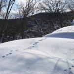 獅子畑登山道
